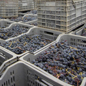 clean and sanitise grape collection containers prior to harvest